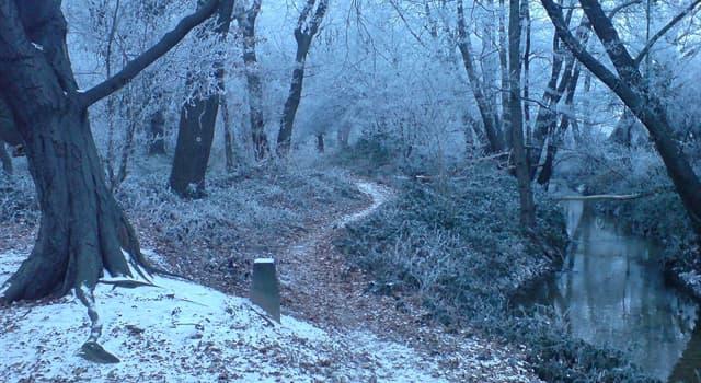 Сiencia Pregunta Trivia: ¿Cuál de los siguientes árboles resiste mejor el frío?