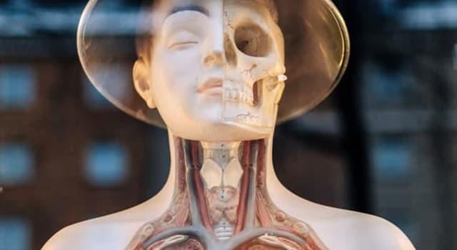 Wissenschaft Wissensfrage: Welches Organ kann von der Krankheit Hepatitis betroffen werden?