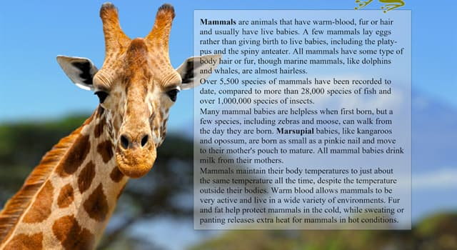 Science Trivia Question: What mammal has the longest life-span?