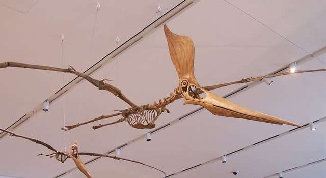 Science Trivia Question: What's the name of a prehistoric flying reptile?