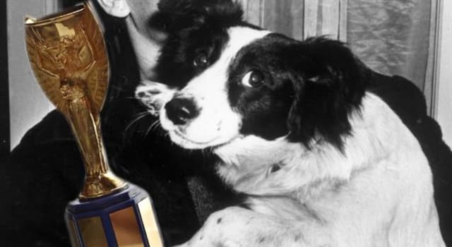 Sport Trivia Question: What was the name of the dog that found the stolen Football World Cup trophy in 1966?