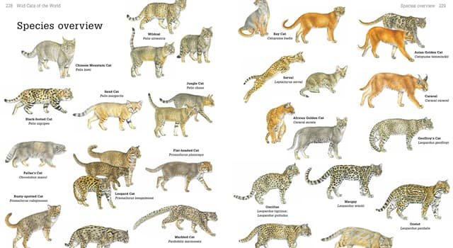 Science Trivia Question: Which of the following is the largest cat?