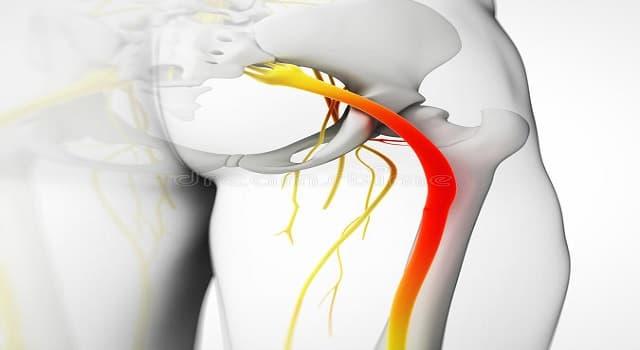 Сiencia Pregunta Trivia: ¿Cómo se llama el nervio que se muestra en esta imagen?