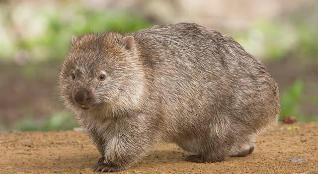Naturaleza Pregunta Trivia: ¿Cuál es el nombre de este animal?