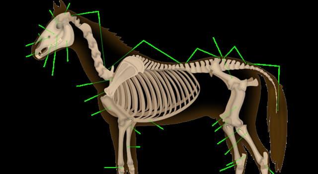 Naturaleza Pregunta Trivia: ¿Cuántos huesos componen el esqueleto de un caballo?