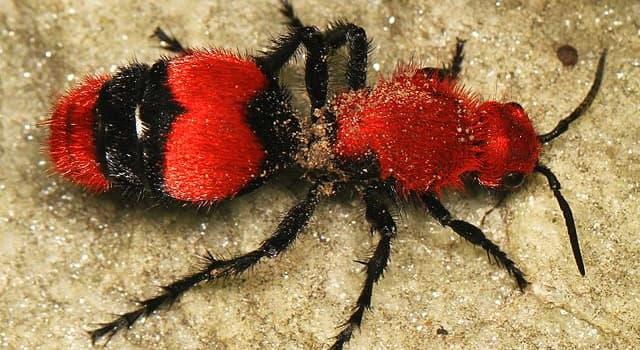Natur Wissensfrage: Zu welcher Familie gehört dieses Insekt?