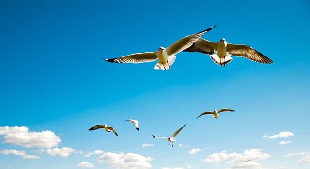 Природа Вопрос: Какая птица может летать спиной вперед?