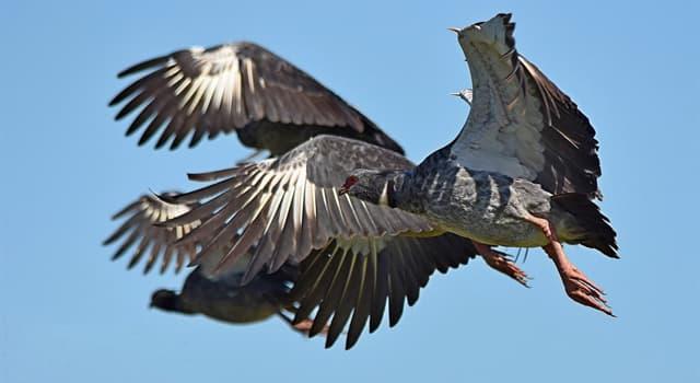 Naturaleza Pregunta Trivia: ¿Cómo se llama el ave de la fotografía?