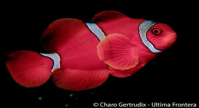 Naturaleza Trivia: ¿Cuál es el nombre común de este pez que se muestra en la imagen?