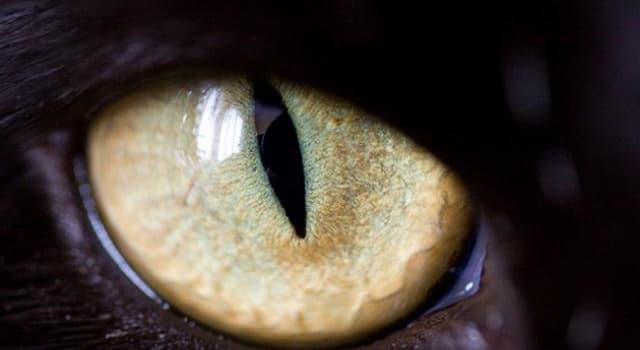 Naturaleza Pregunta Trivia: ¿Qué animal posee los ojos más grandes del planeta?