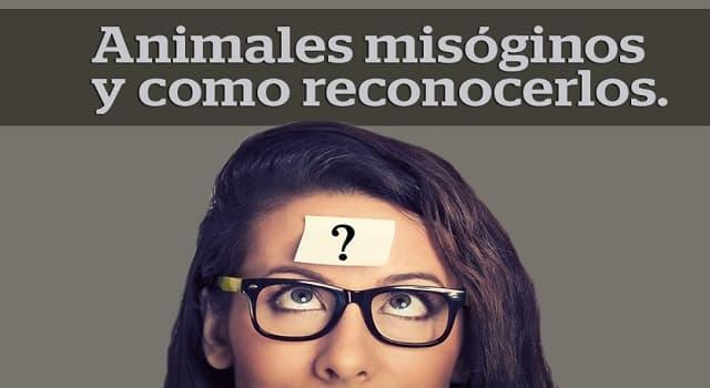 Sociedad Pregunta Trivia: ¿Qué significa el término misógino?