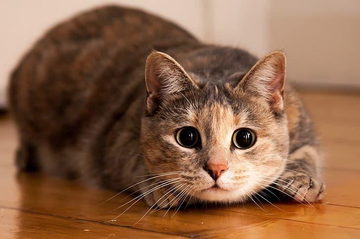 Geschichte Wissensfrage: In welchem Land wurden die Katzen besonders verehrt?