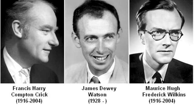Science Trivia Question: What did James Watson, Francis Crick, and Maurice Wilkins discover?