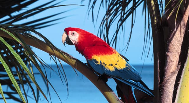 Nature Trivia Question: Which bird is known as the Sea Parrot?