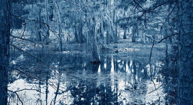 Culture Trivia Question: Who wrote and originally recorded 'Blue Bayou'?