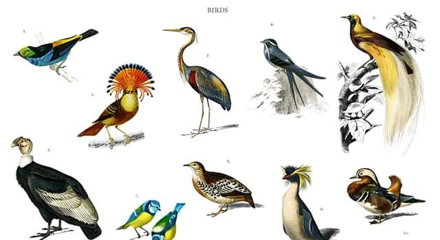Сiencia Pregunta Trivia: ¿A partir de qué grupo de animales evolucionaron las aves?