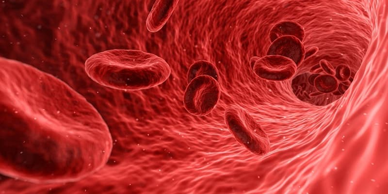 Наука Вопрос: Что из перечисленного не относится к кровяным клеткам?
