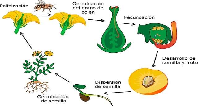 C mo se llaman las plantas que las preguntas trivia for Como se llaman las plantas ornamentales