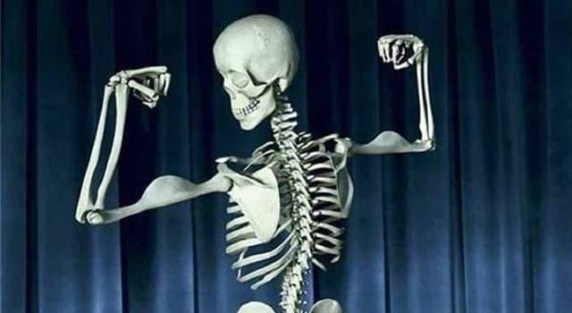 Сiencia Pregunta Trivia: ¿Cuántos huesos tiene el cuerpo humano adulto?