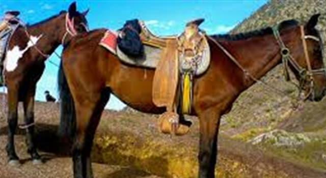 Cultura Pregunta Trivia: ¿Cuál de los siguientes términos no está relacionado con la equitación?