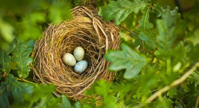 Naturaleza Pregunta Trivia: ¿Cuál es el ave más pequeña?