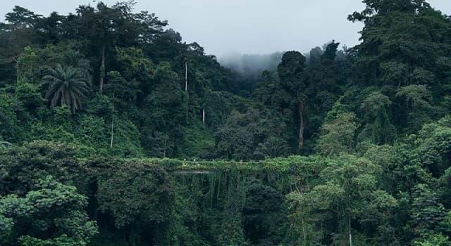 Geografía Pregunta Trivia: ¿Entre qué latitudes se localiza la selva ecuatorial?