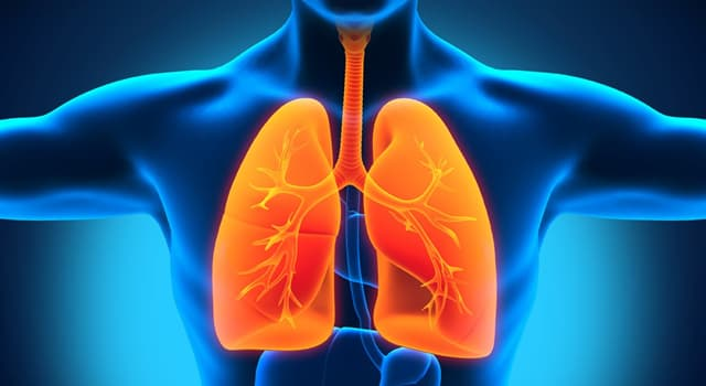 Science Trivia Question: In the human body, the lungs are responsible for removing which gas from the blood?