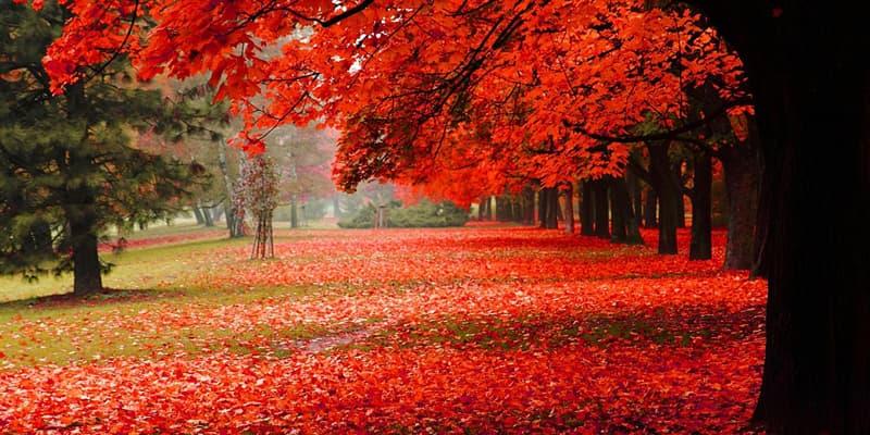 Природа Вопрос: Какого числа день осеннего равноденствия?
