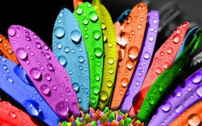 Natur Wissensfrage: Welche Farbe fehlt im Regenbogen?