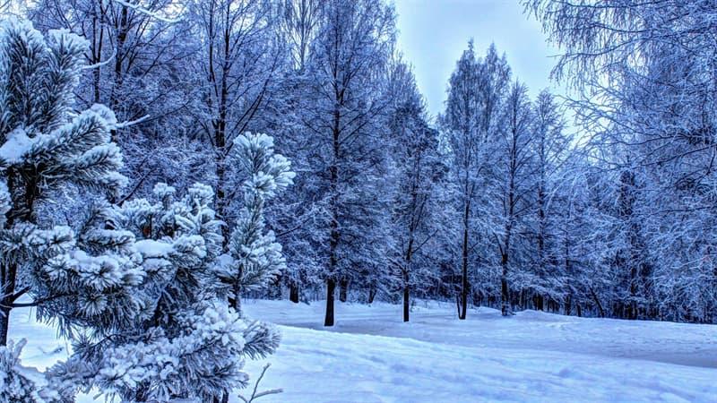 Natur Wissensfrage: Wann ist der Tag der Wintersonnenwende?