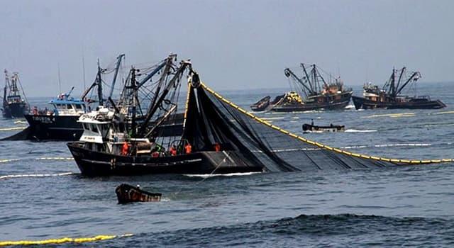 Сiencia Pregunta Trivia: ¿Por qué la costa peruana es una de las más productivas del planeta?