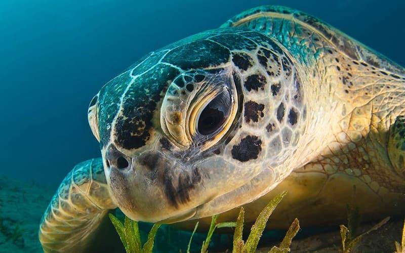 Natur Wissensfrage: Stimmt es, dass Schildkröten weinen können?