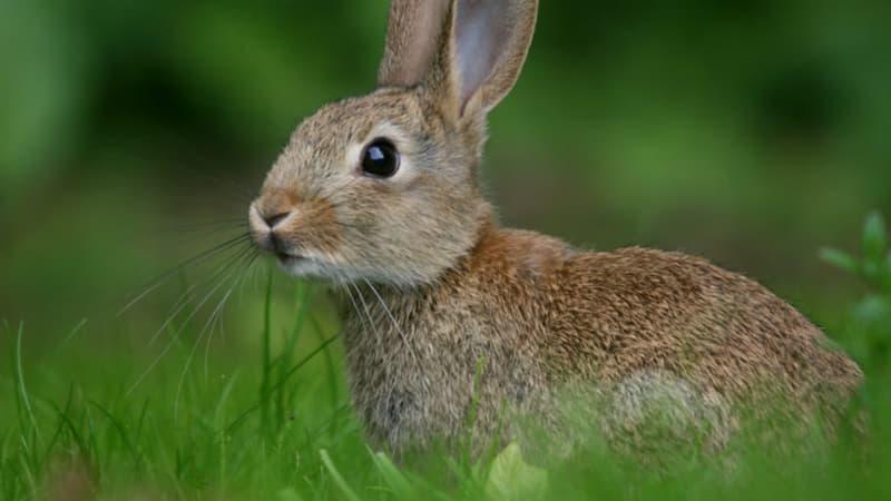 Природа Вопрос: Правда ли, что зайцы трусливы?