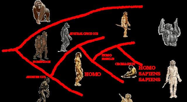 Сiencia Trivia: ¿Qué continente es la cuna de nuestra especie (Homo sapiens)?
