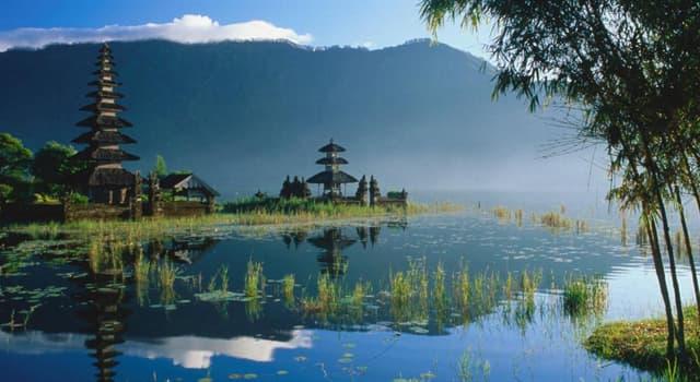 Cultura Pregunta Trivia: ¿Qué es el Kopi Luwak?