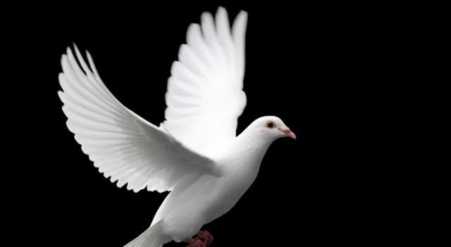 """Cultura Pregunta Trivia: ¿Quién fue el autor de la canción """"La paloma""""?"""