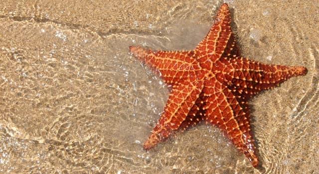 Природа Вопрос: Сколько глаз у морской звезды?