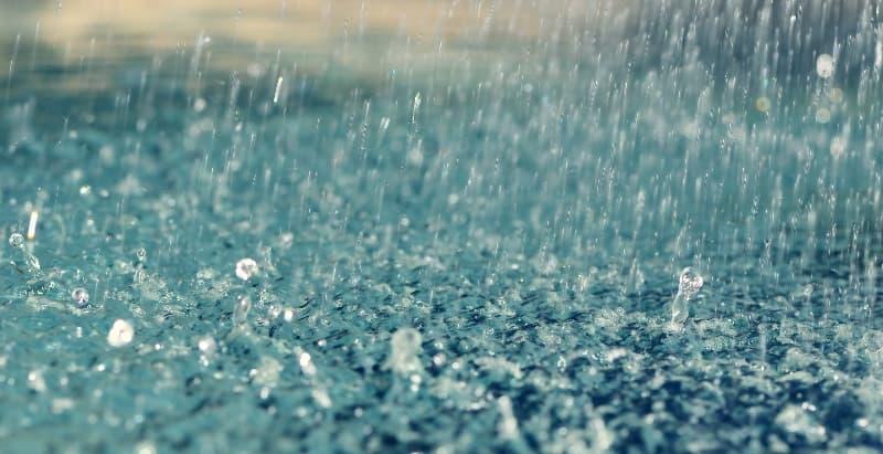 Природа Вопрос: Сколько пар сердец у дождевых червей?