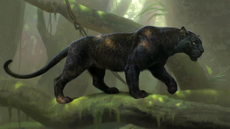 Природа Вопрос: Существует ли на самом деле чёрная пантера?