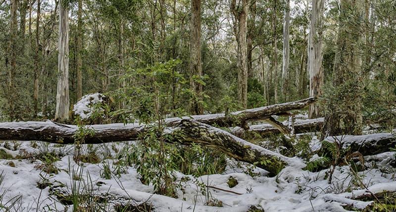 География Вопрос: В каком месяце в Австралии начинается зима?