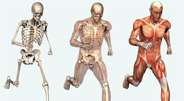 Science Trivia Question: What is the hardest substance in the human body?
