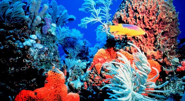 Science Trivia Question: What is the skeleton of corals composed of?