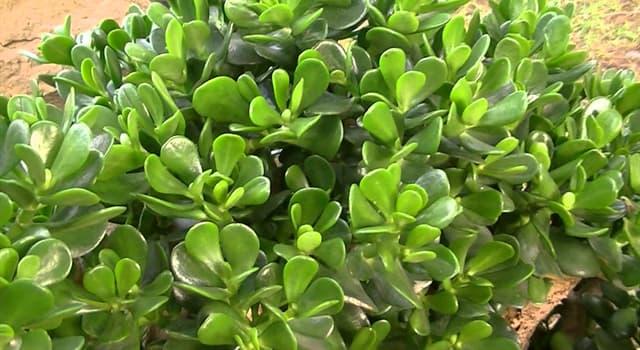 Naturaleza Pregunta Trivia: ¿Cómo se llama la planta de la imagen?