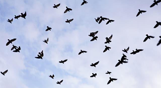 Природа Вопрос: Какая птица является самой умной в мире?