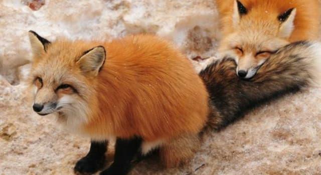 Природа Вопрос: Какое животное обладает самым сильным укусом в мире?
