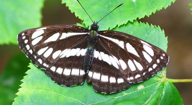 Наука Вопрос: Какой раздел зоологии изучает насекомых?