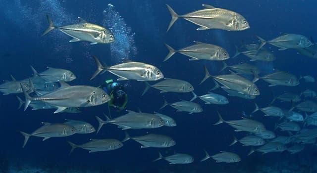 Природа Вопрос: Какую рыбу называют морской щукой?