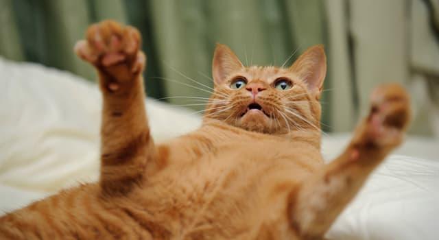 Природа Вопрос: Кто из семейства кошачьих обладает самым сильным укусом?