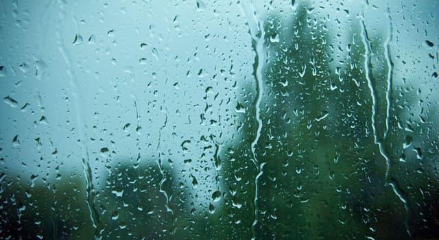 Природа Вопрос: Правда ли, что дождь содержит витамин В12?