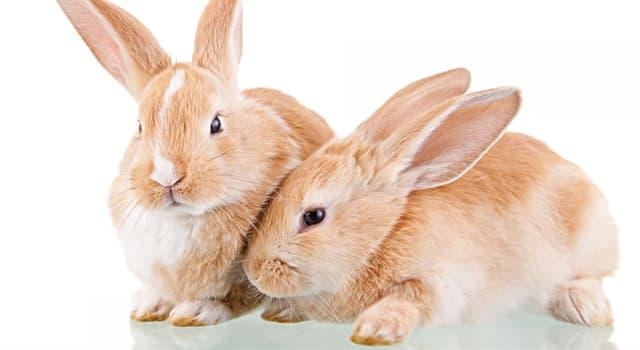 Природа Вопрос: Правда ли, что кролики бегают быстрее зайцев?